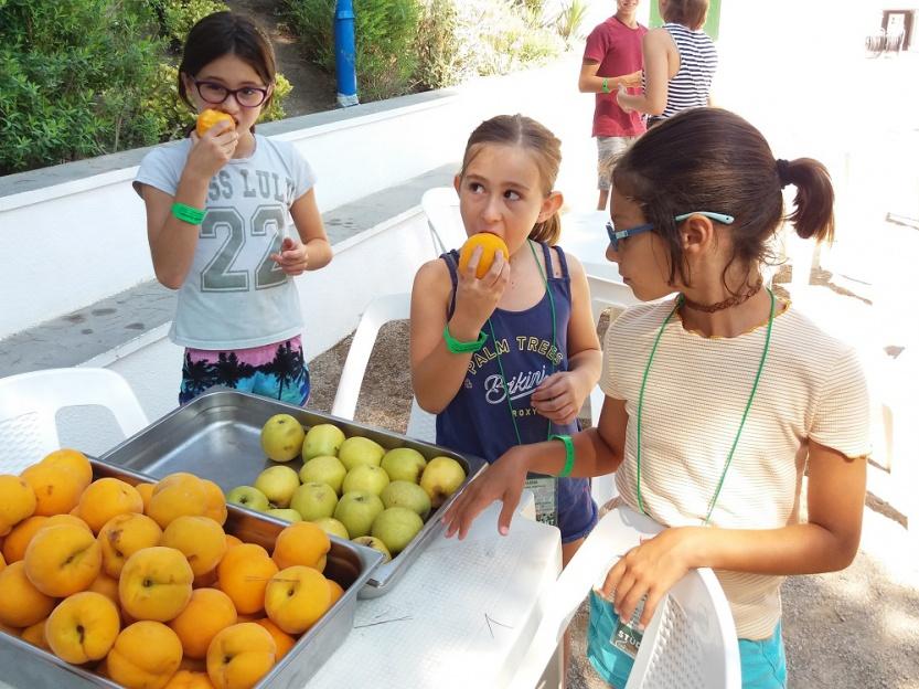 Campamentos-verano-alimentacion-tamarit33