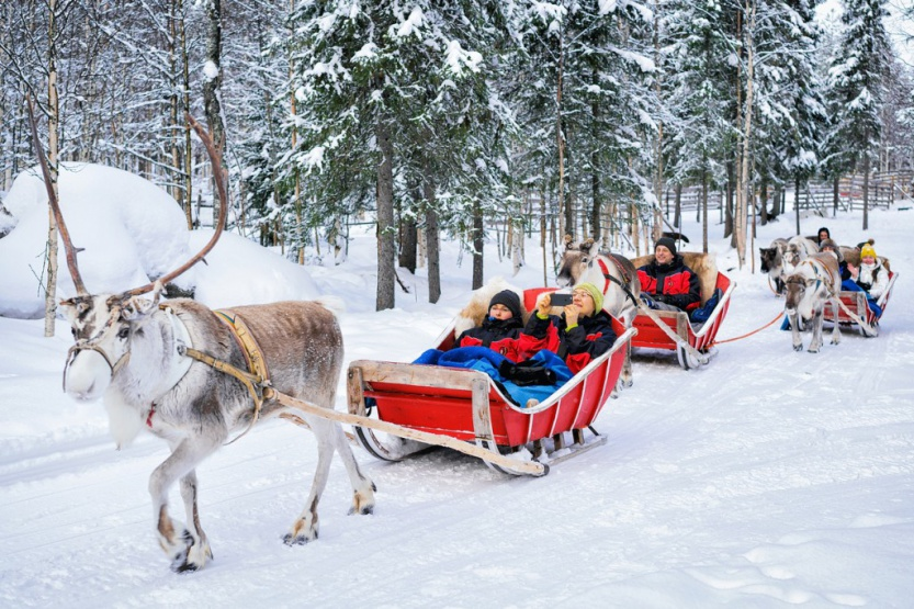 People in Reindeer sledge caravan safari in winter forest Rovaniemi